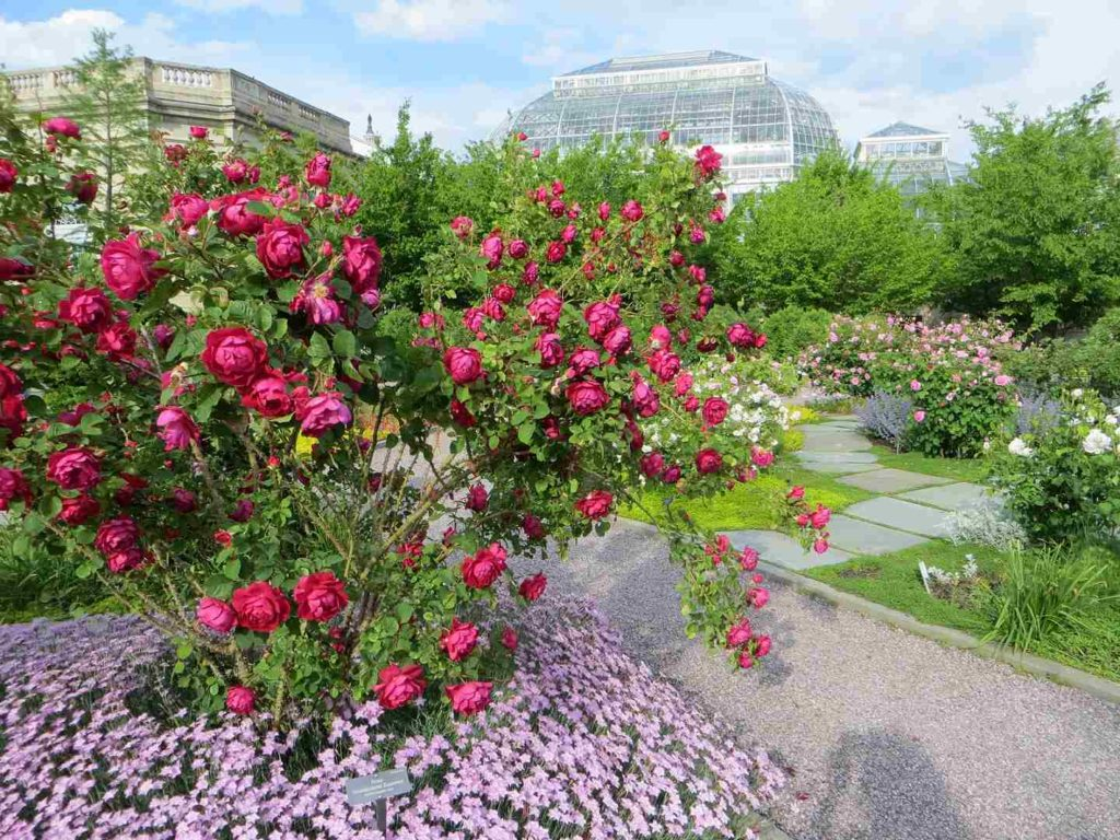 Rosengarten im United States Botanic Garden Washington, DC
