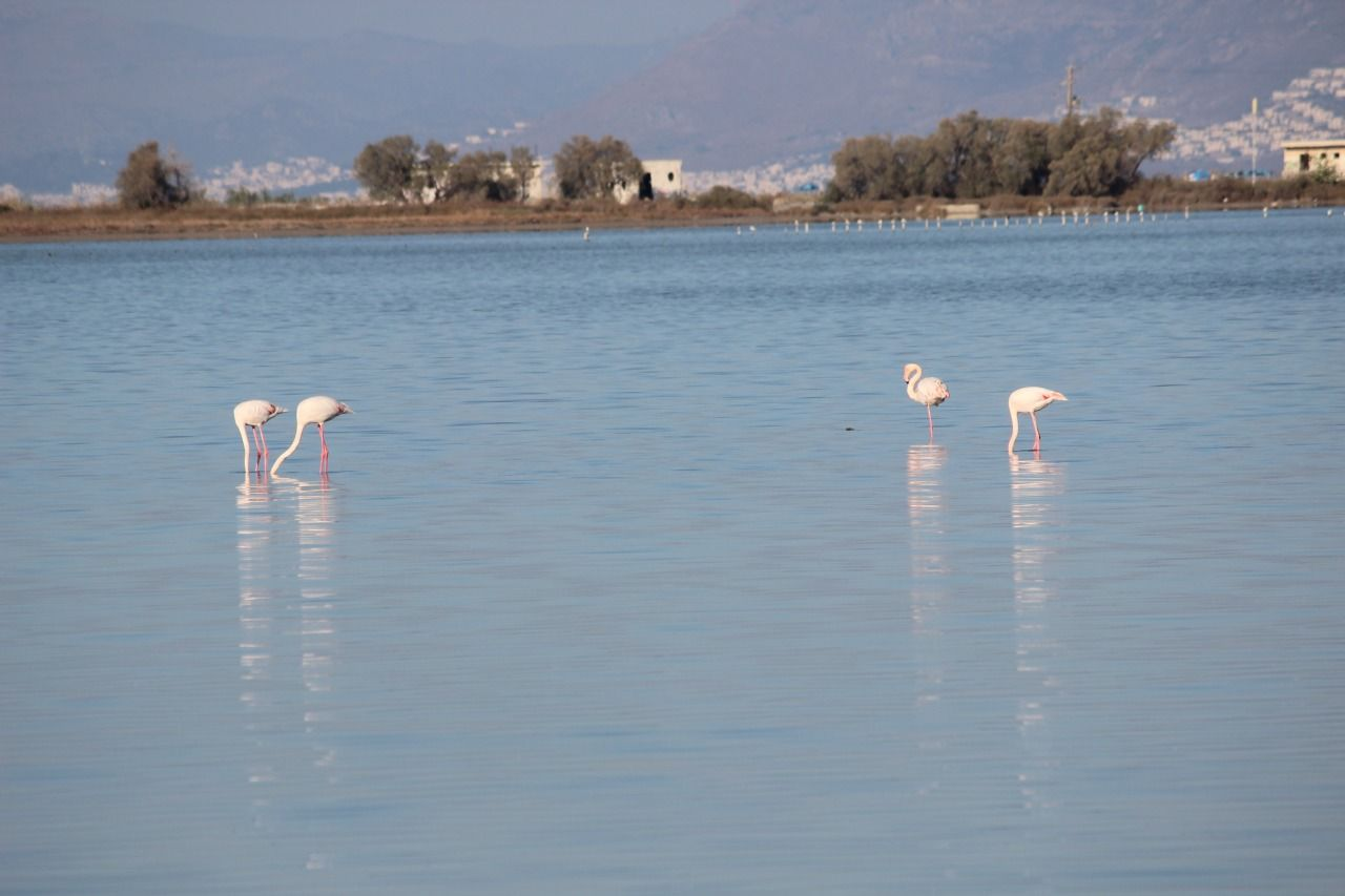 Alikes Salzsee Flamingos