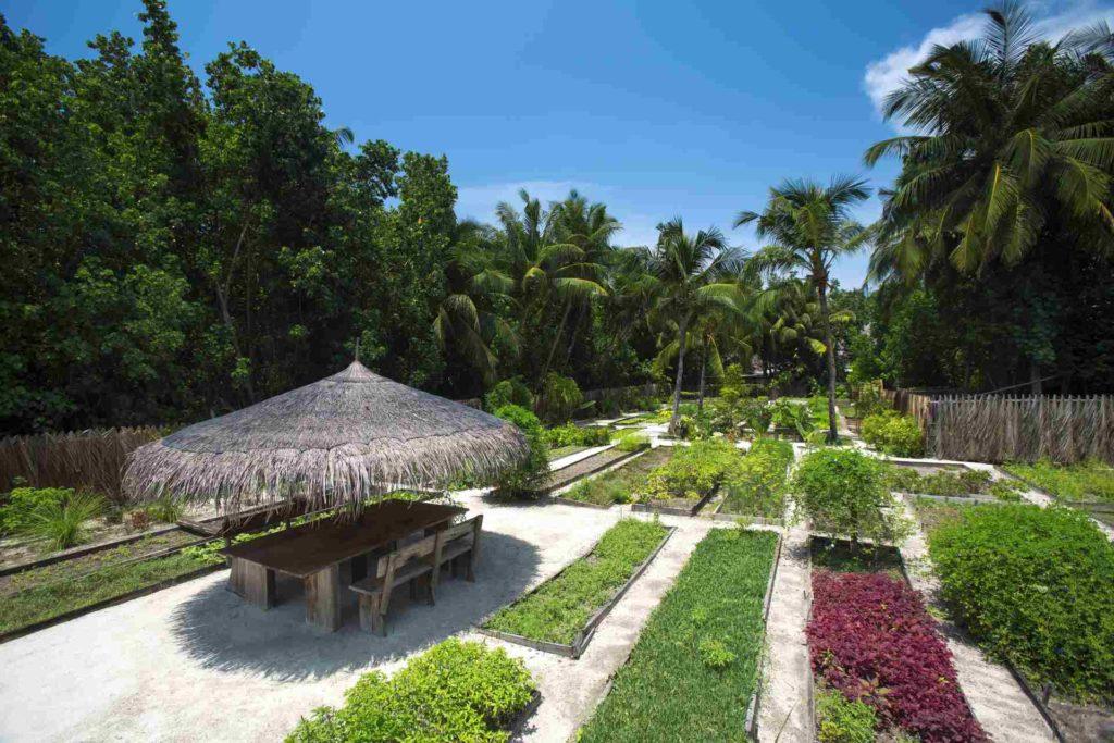 Bio-Garten im Gili Lankanfushi