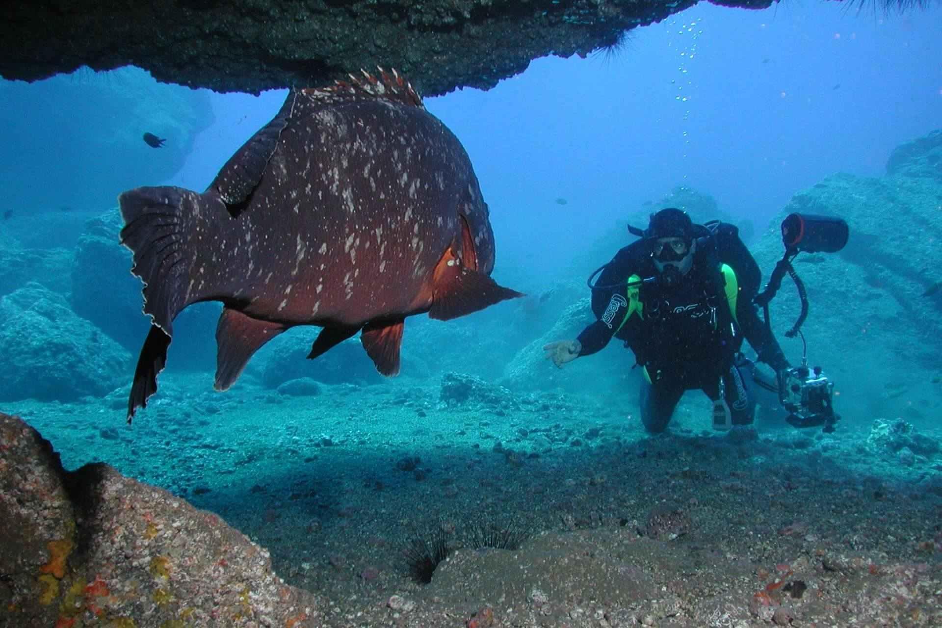 Spektakuläre Begegnung unter Wasser vor Madeira