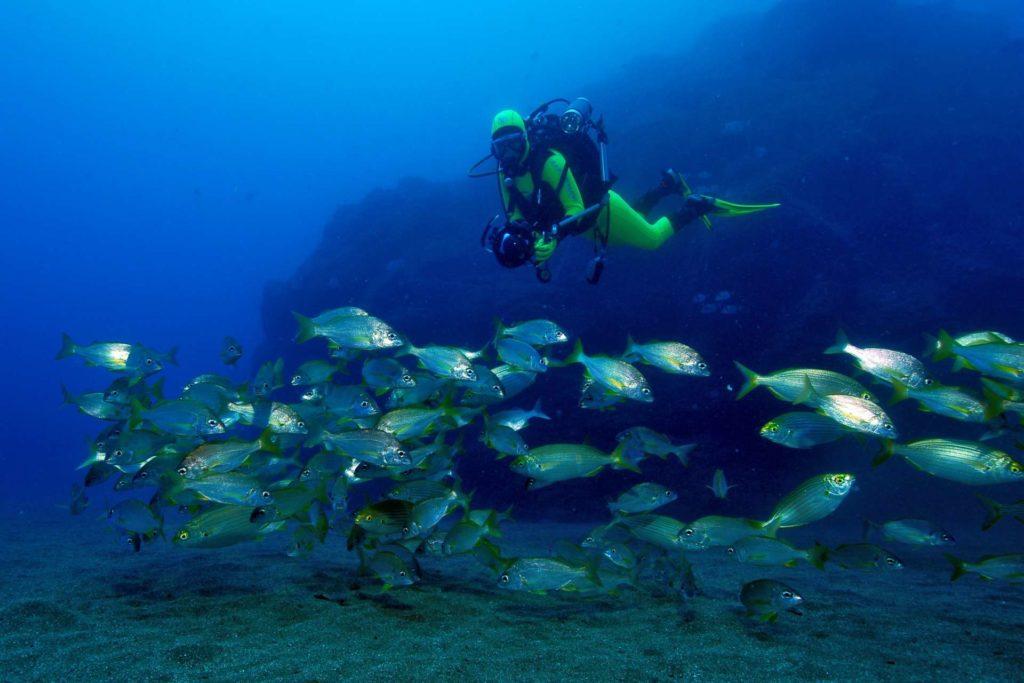 Taucher trifft Fischschwarm vor Madeira