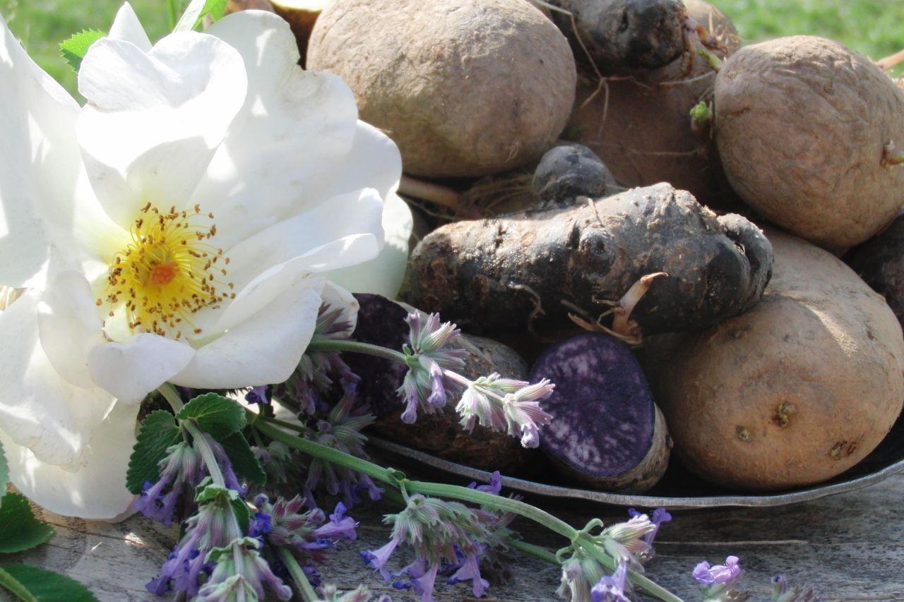 Kartoffelvielfalt bei den Schwäbischen Kartoffelwirten