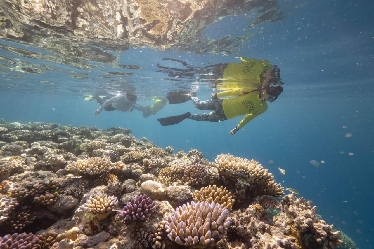 Master Reef Guide am Korallenriff