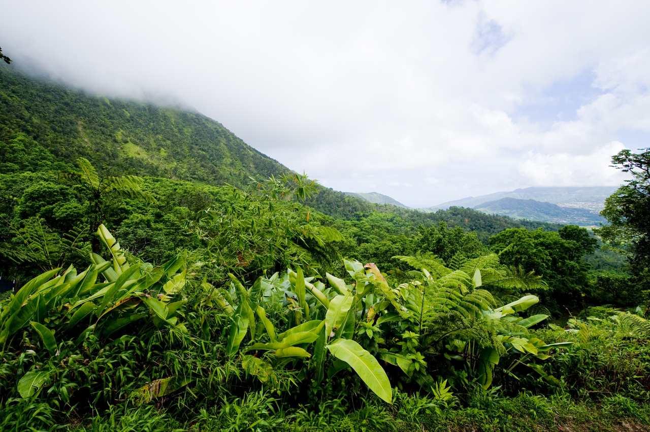 Route de la Trace durch den Regenwald auf Martinique