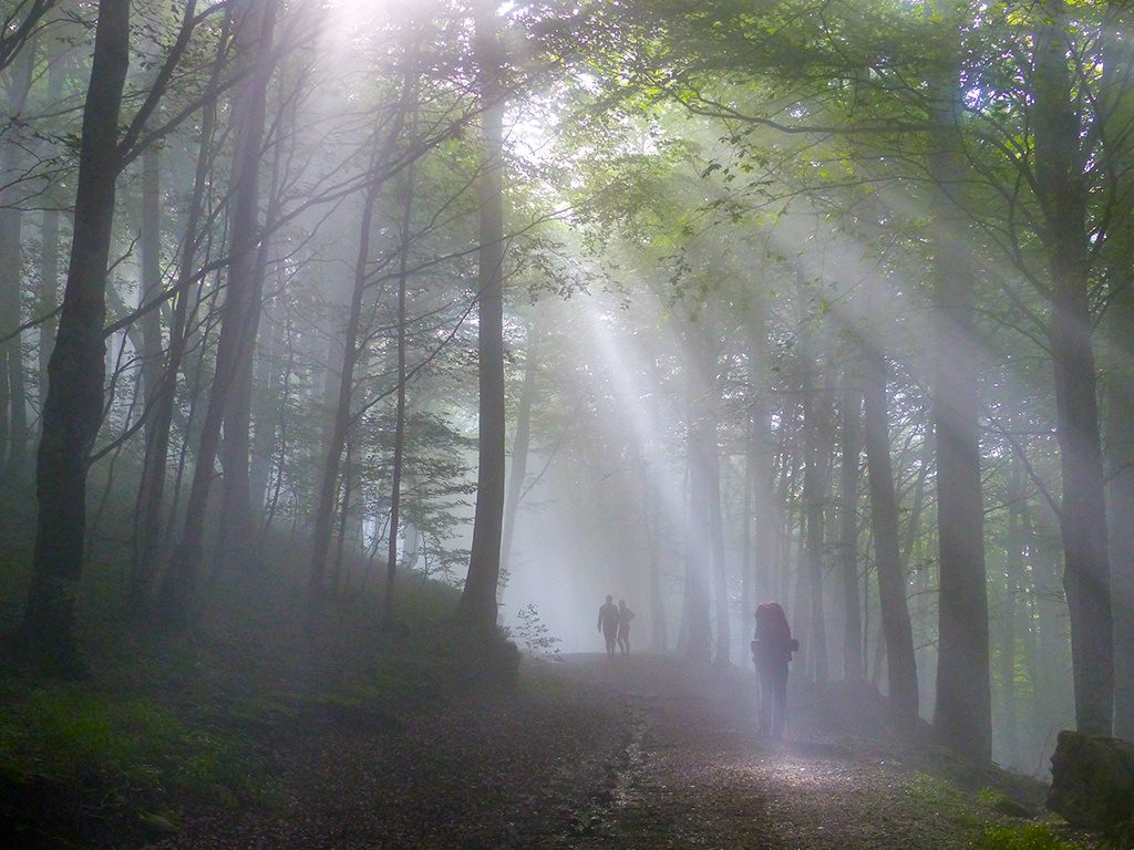 Sonnenstrahlen am Morgen in einem Wald in Navarra