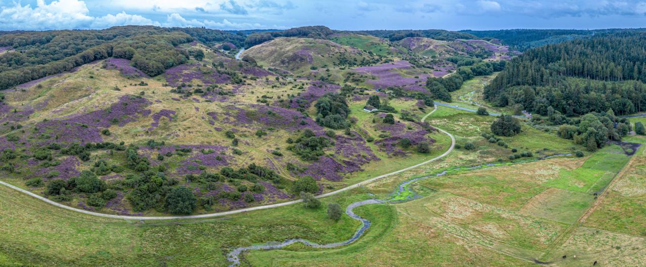 Hügel- und Heidelandschaft im Naturschutzpark Rebild Bakker