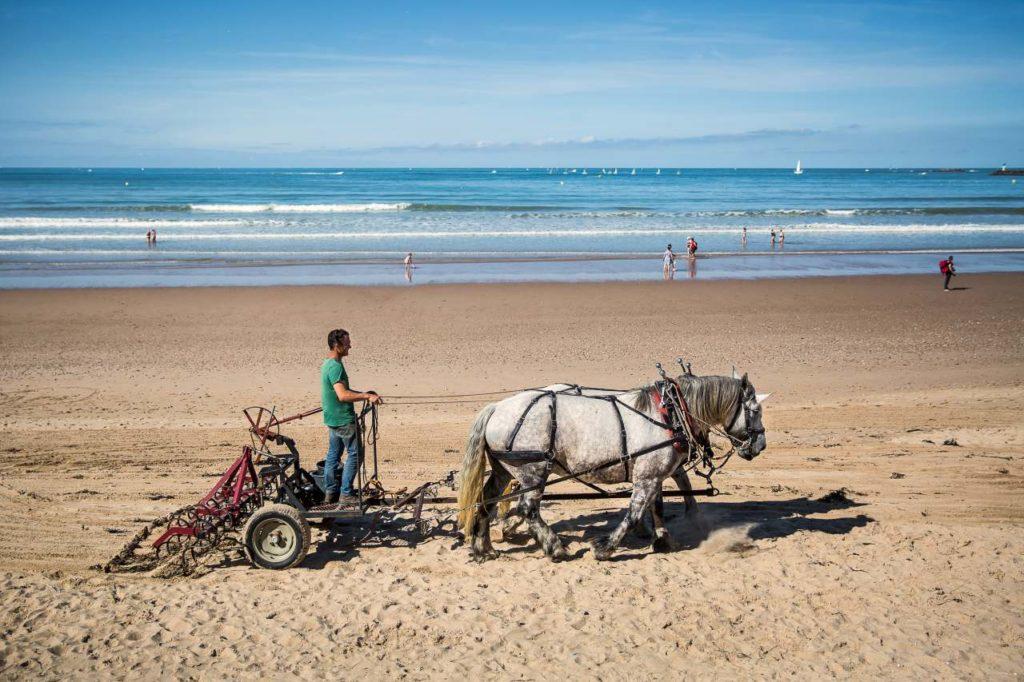 Strandreinigung mit Pferd in Saint-Gilles-Croix-de-Vie