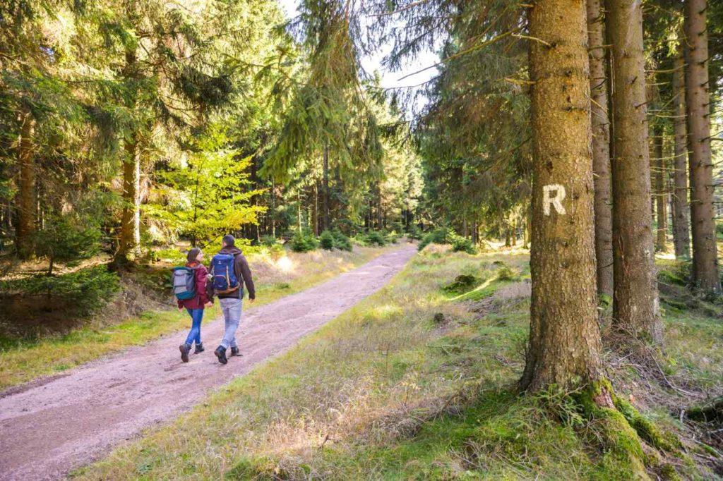 Wanderer auf einem Rennsteig-Weg