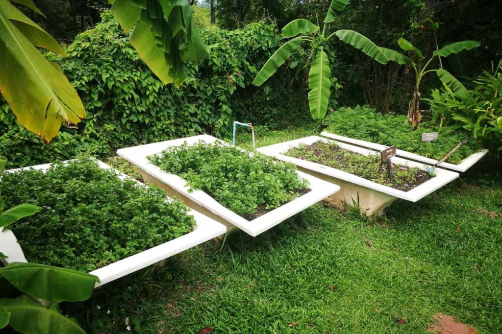 Bio Garten im The Tongsai Bay