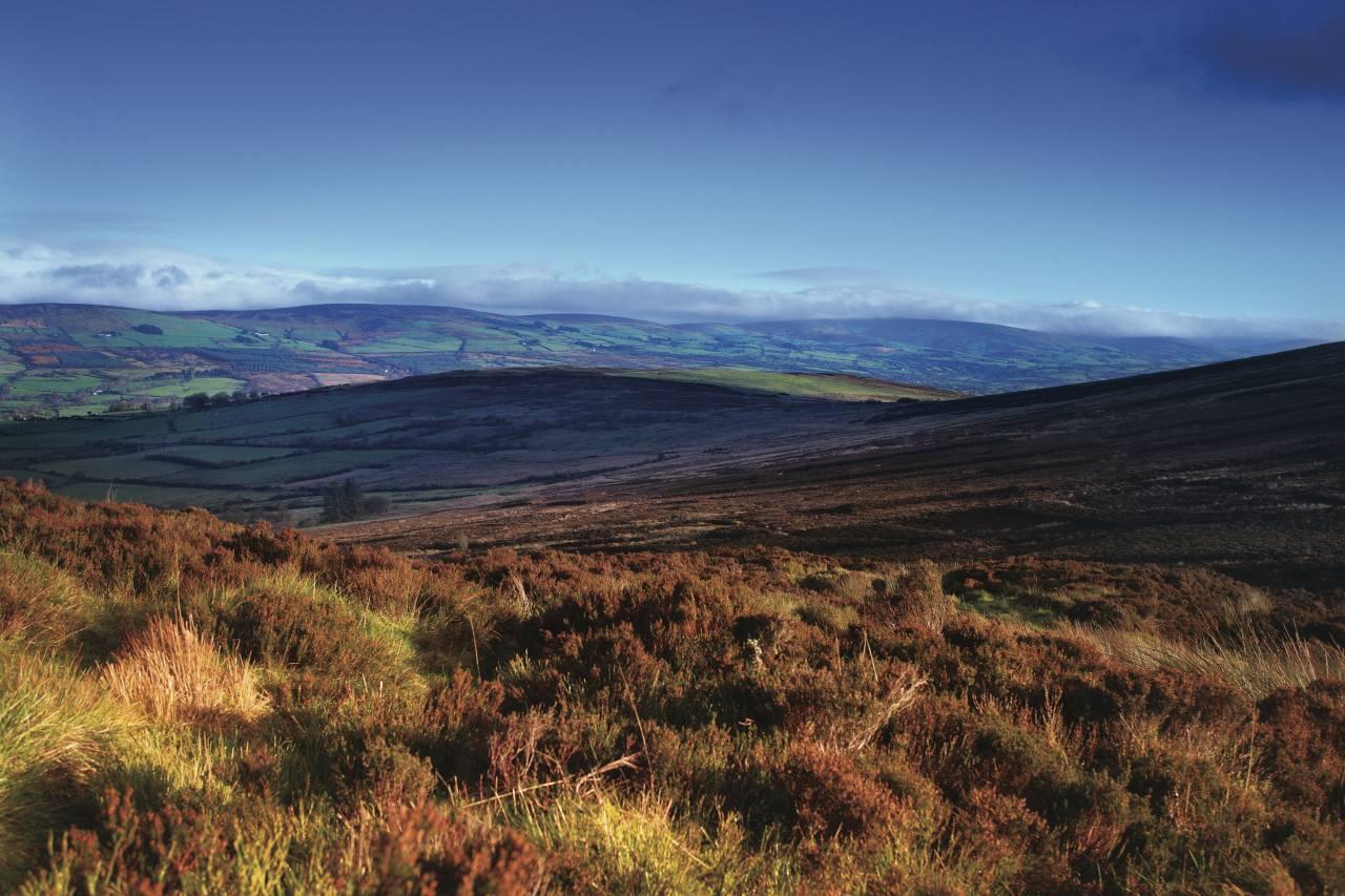 Heidelandschaft in den Sperrins in Irland