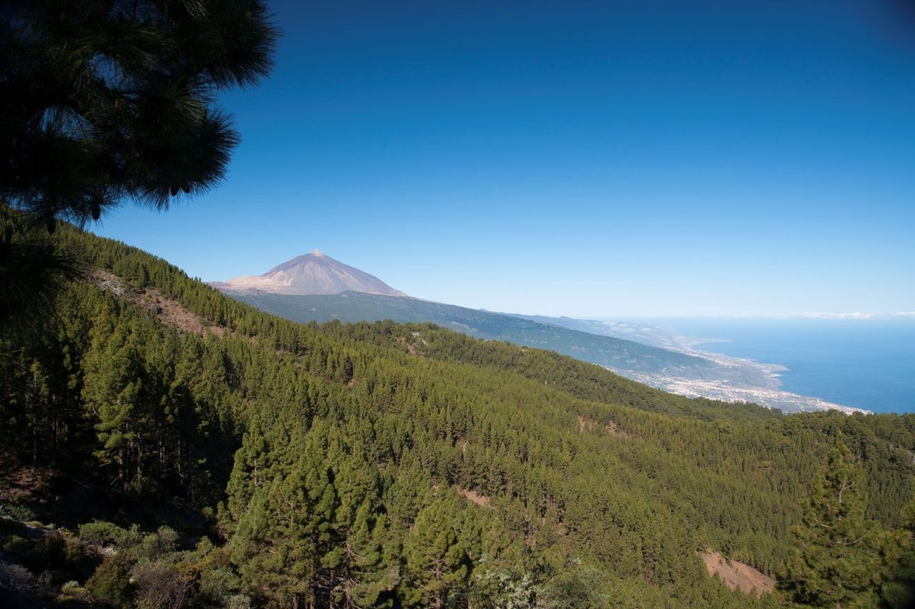 Naturpark Corona Forestal mit dem Teide