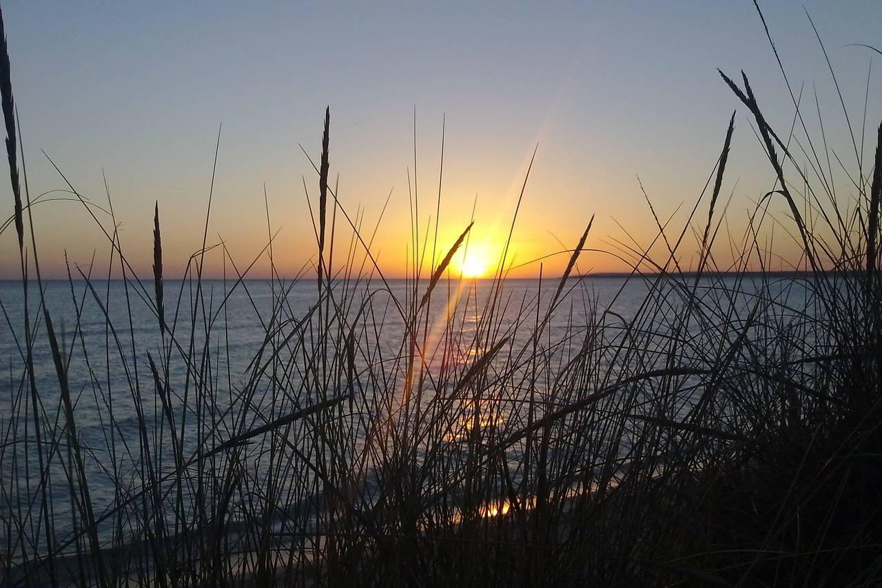 Dünengras am Strand von Es Trenc