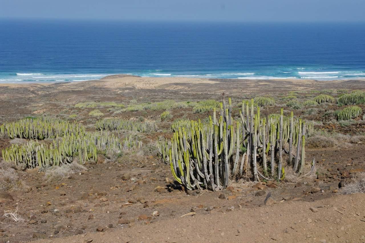 Karge Pflanzenwelt im Naturpark Jandia