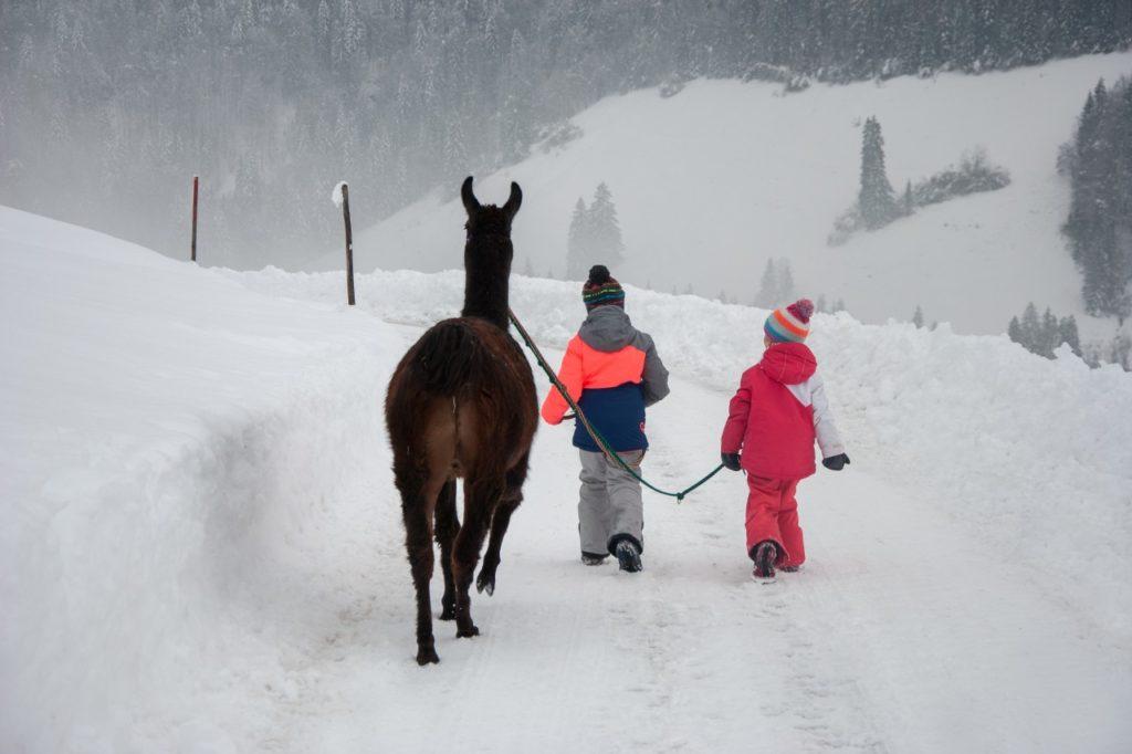 Lama Trekking Kinder Pillerseetal