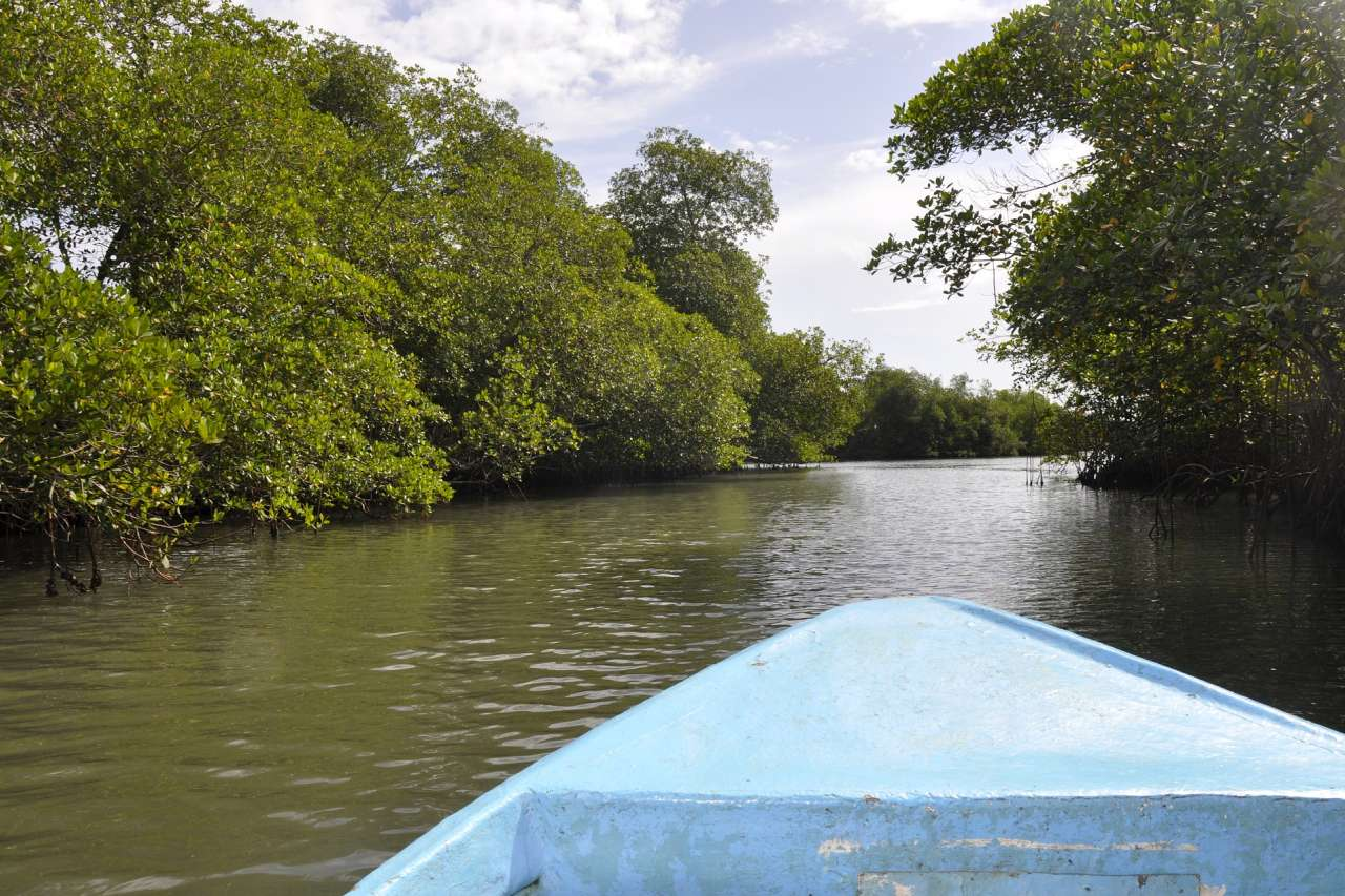 Mangrovenfluss Dominikanische Republik
