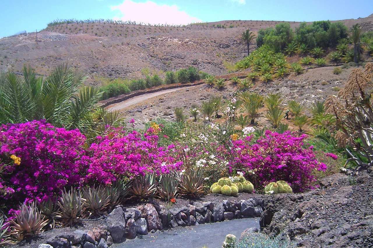 Vegetation Fuerteventura