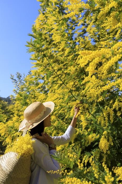 Wanderung durch die Mimosenwälder an der Côte d'Azur