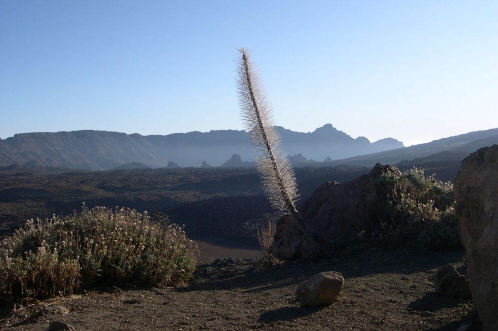 Fruchtbare Vulkanerde auf Lanzarote