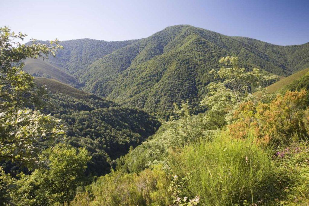Biosphärenreservat von Muniellos Asturien