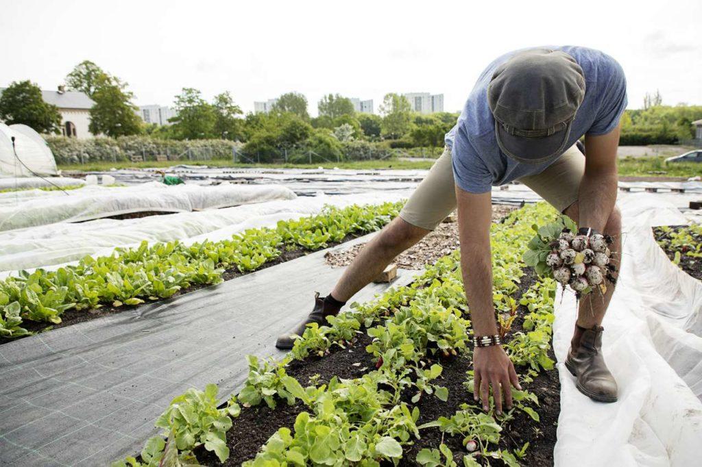 Botildenborg Gemüseernte