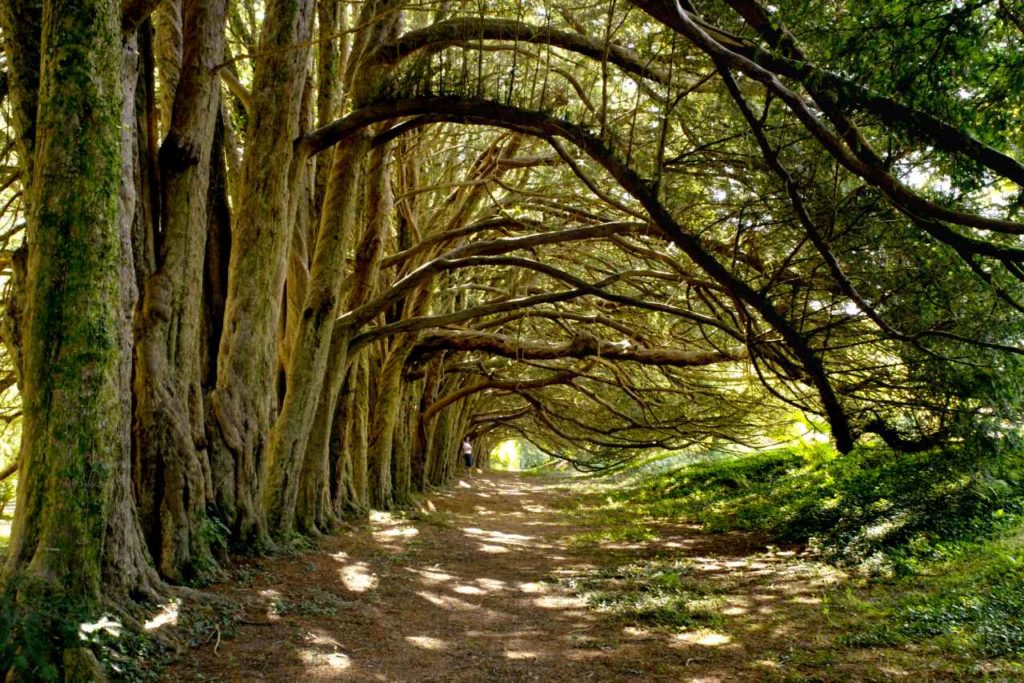 Spektakuläre Bäume am Huntington Castle