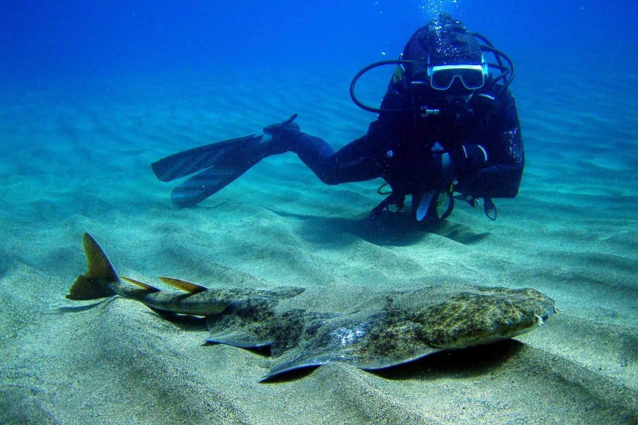 Taucher mit Meerengel Lanzarote