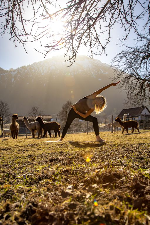 Alpaka Yoga in Pfronten