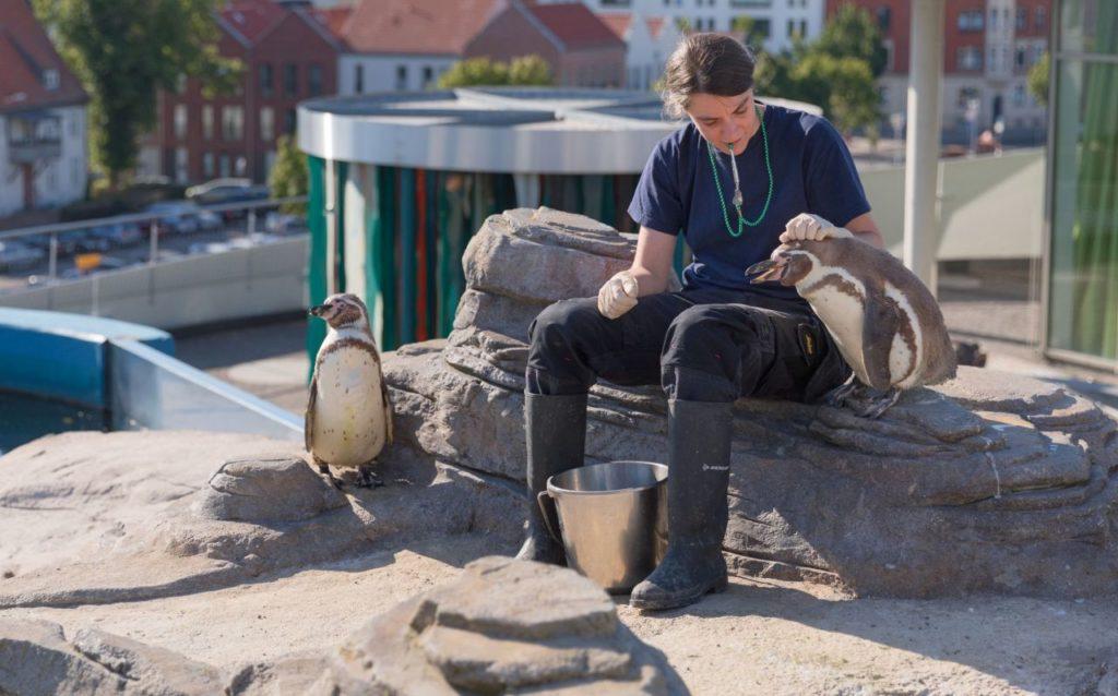Hörvermögen von Pinguinen Ozeaneum