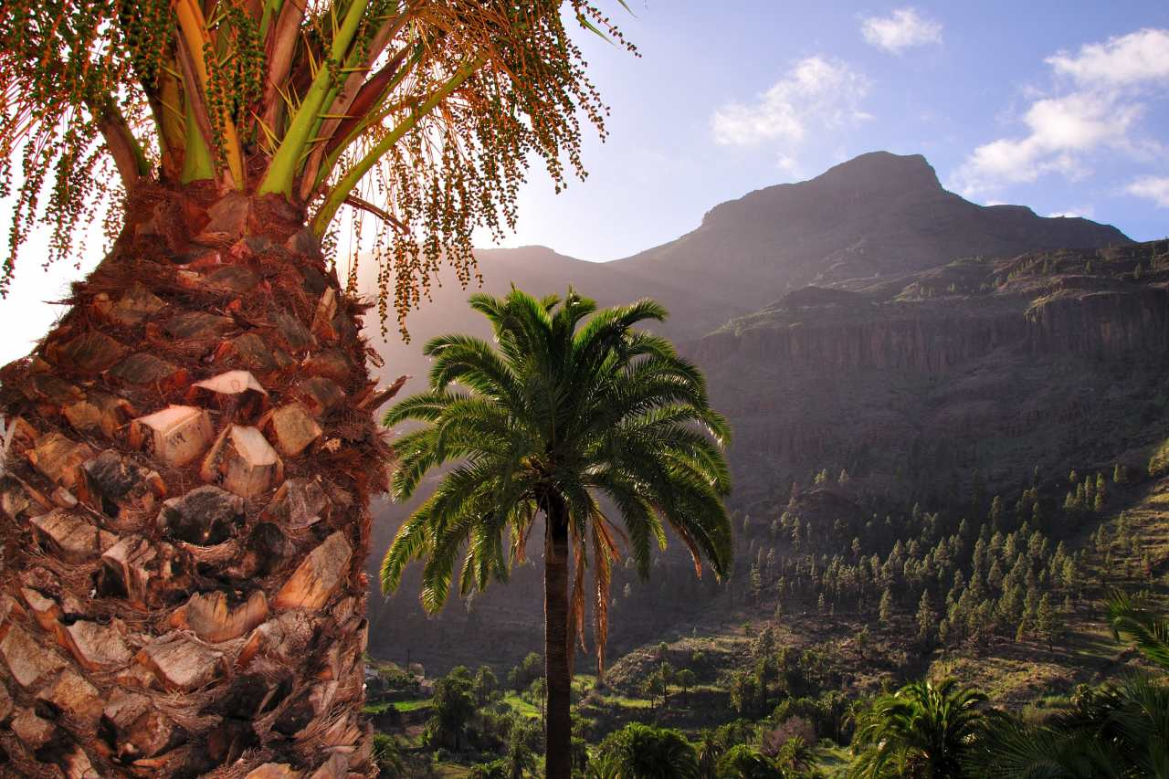 Palmen in Fataga