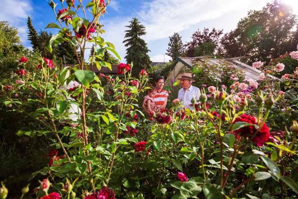 Privater Rosengarten Familie Auer Gaienhofen