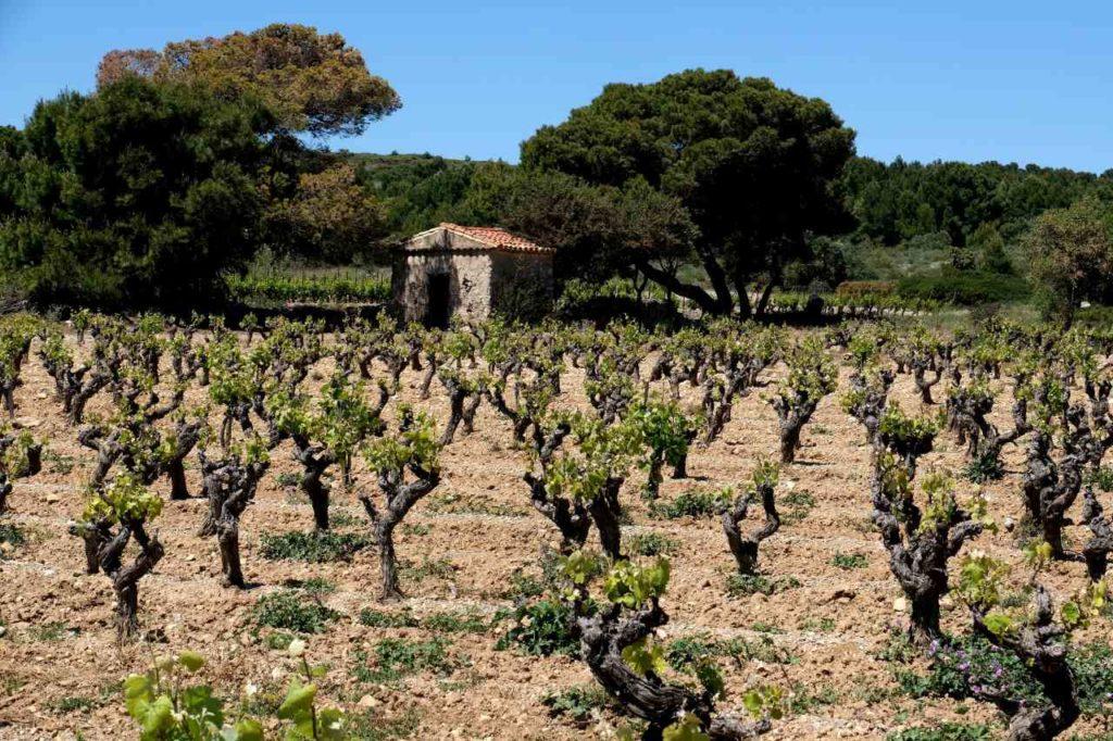 Weinlagen von La Clape
