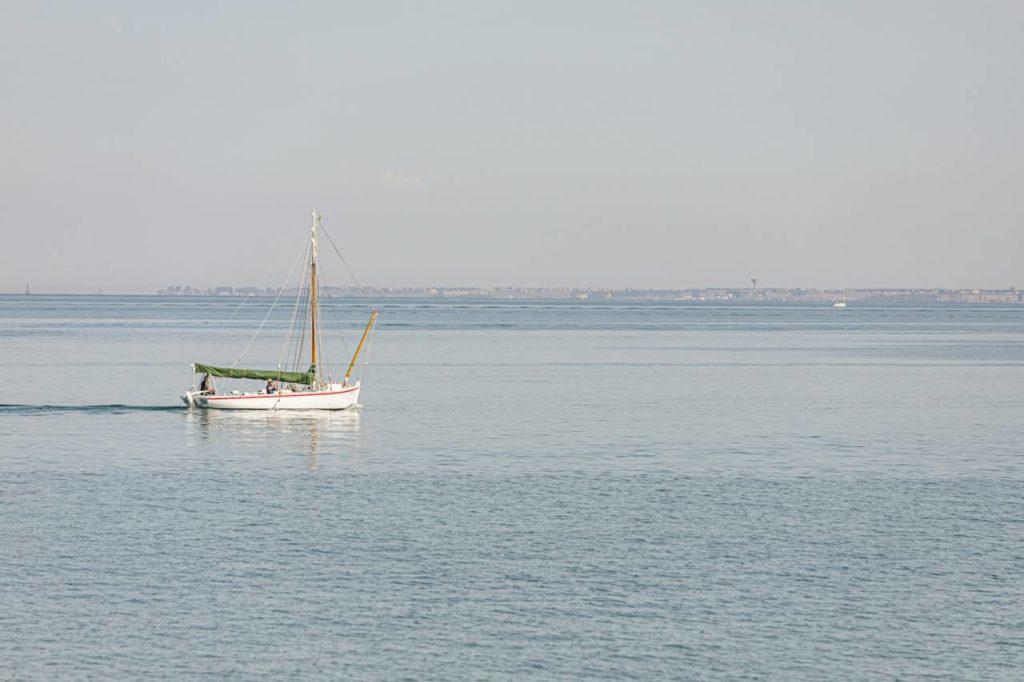 Seetang von der Ile de Ré