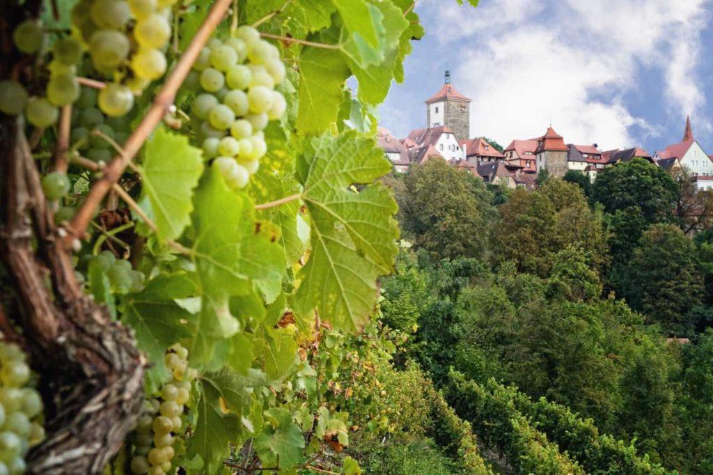 Weinberg in Rothenburg ob der Tauber