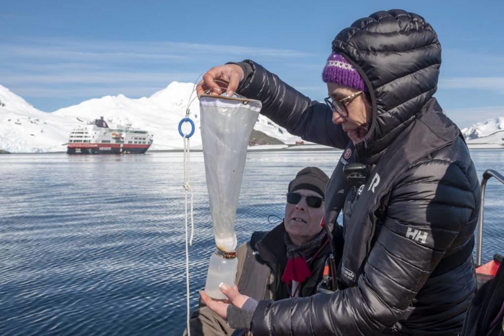 Wissenschaftler sammeln Blubber von Walen