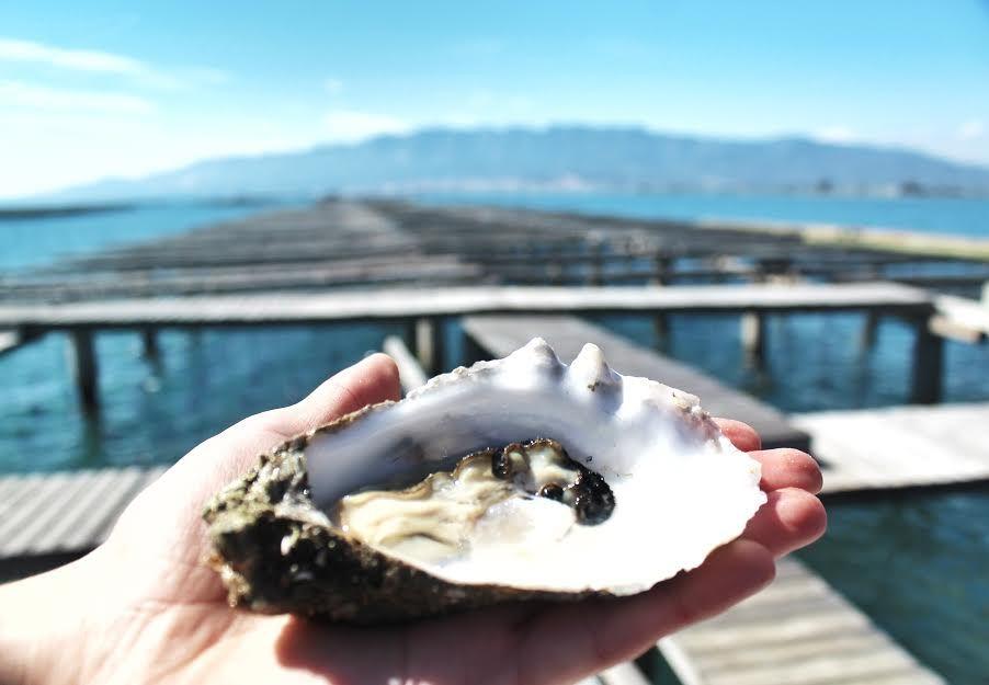 Austern aus Katalonien