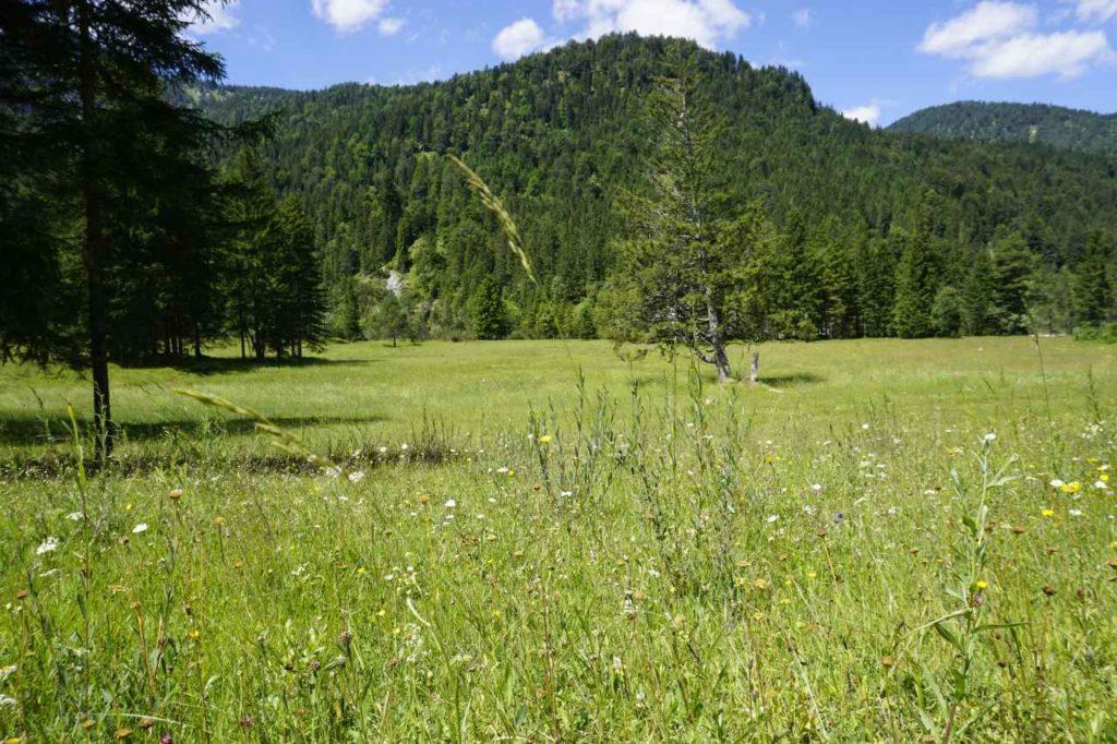 Rangertouren Natur Tölzer Land