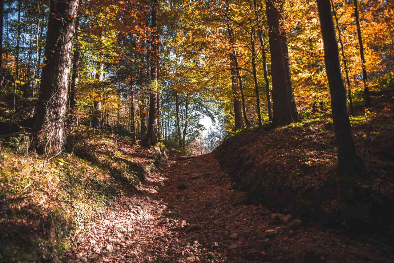 Laubwald Herbst Kufsteinerland
