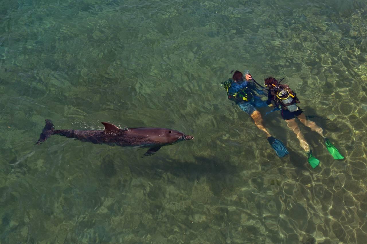 Tauchen mit Delfinen vor Eilat