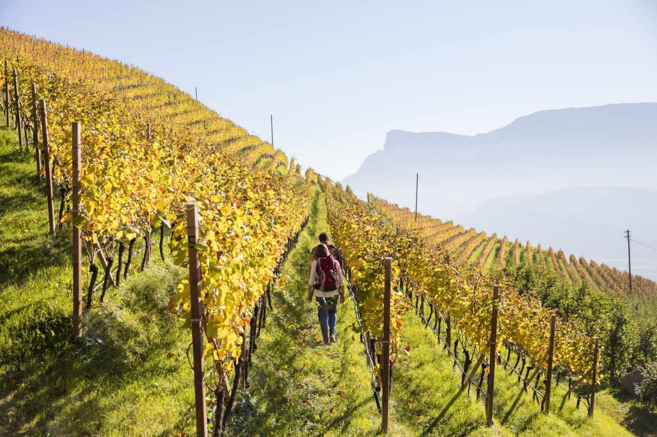 Weinberge Herbst Südtirol