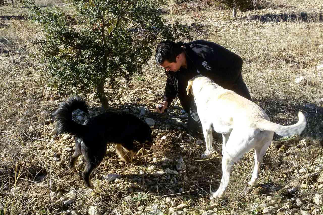Trüffelhunde in Navarra