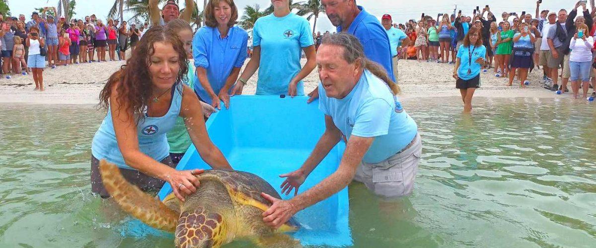 Bette Zirkelbach wildert eine Schildkröte aus