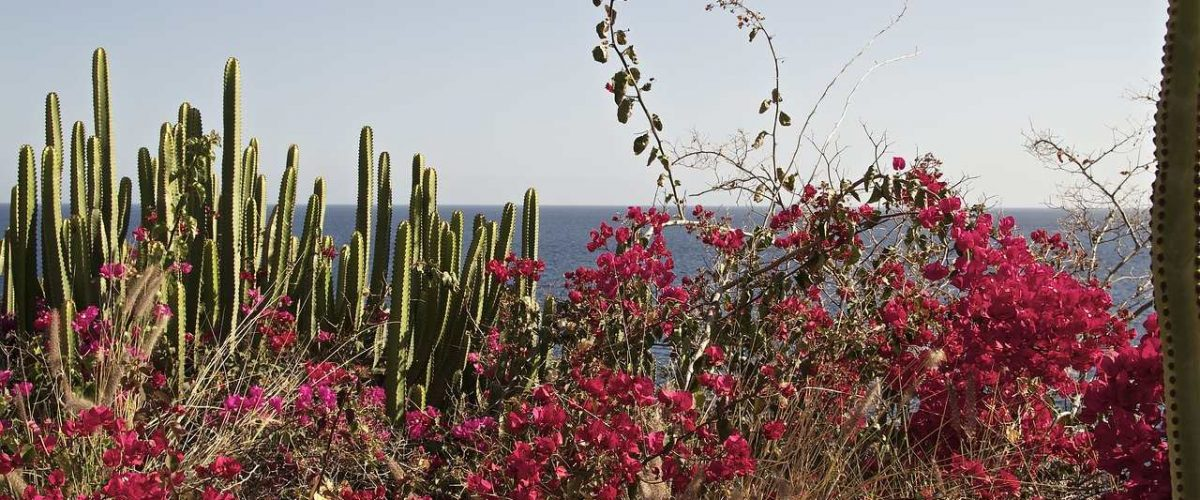 Botanik Gran Canaria