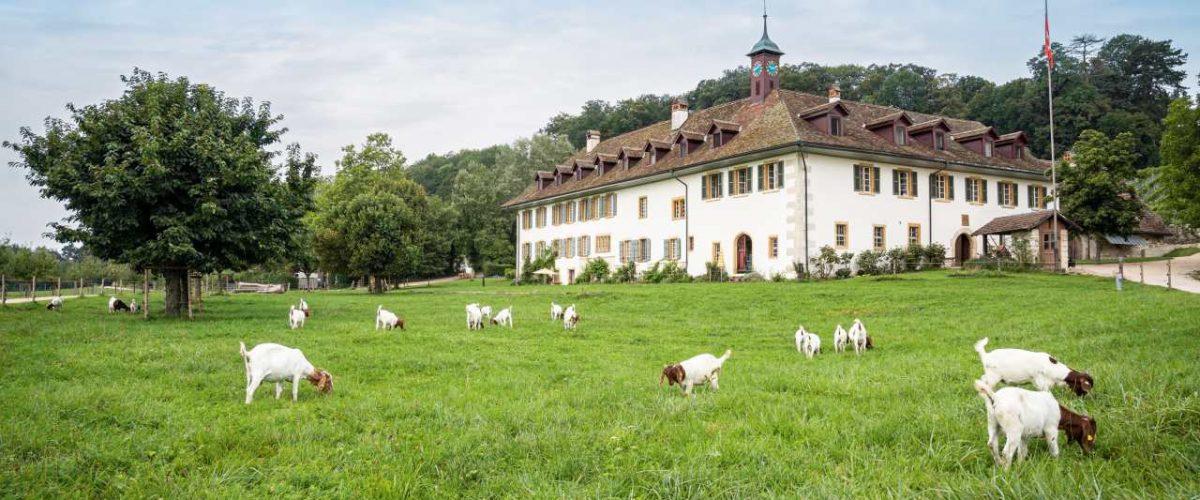 Klosterhotel St. Petersinsel in Erlach