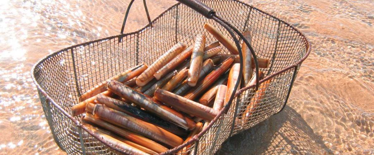 Korb mit Muscheln von der Insel Oléron