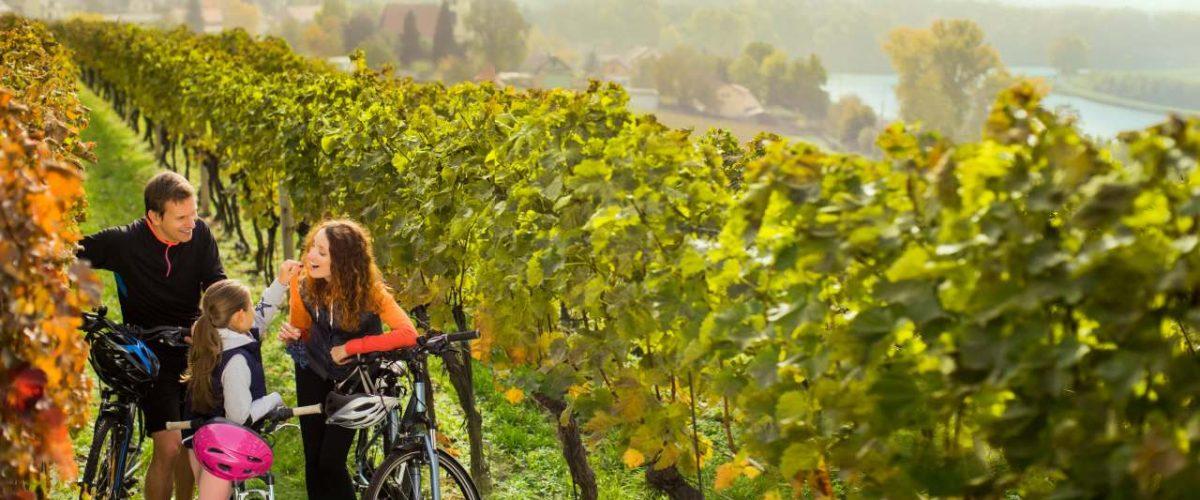 Radfahren in tschechischem Weinberg an der Elbe