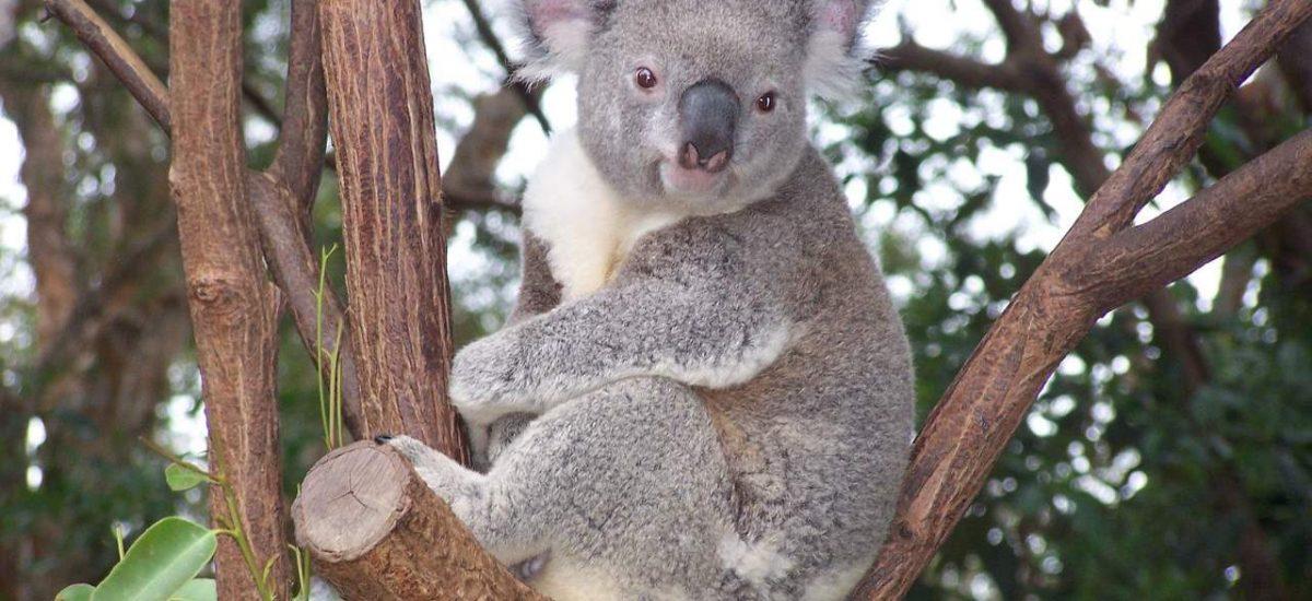 Reisemagazin Australien