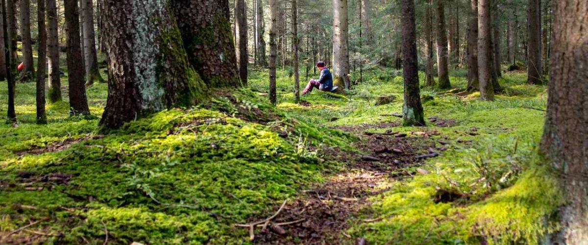 Waldbaden Bergwald Pfronten